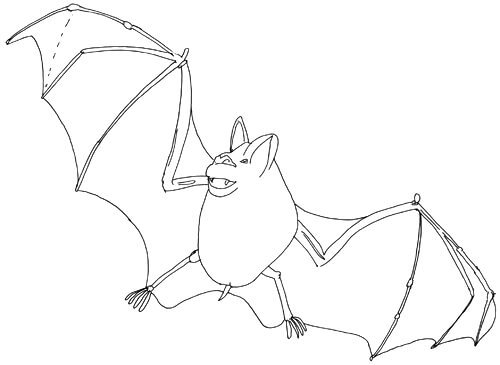 Fledermaus fliegt Skizze