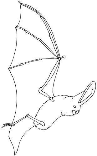 Fledermausflügel von der Seite Skizze