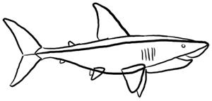 Haifisch von der Seite zeichnen - Grundformen
