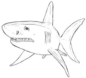 Fische und Haie: Haifisch Zeichnung