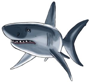 Haifisch Kolorierung