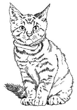 Sitzendes Kätzchen - Zeichnung
