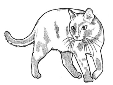 Katze dreht sich - Zeichnung