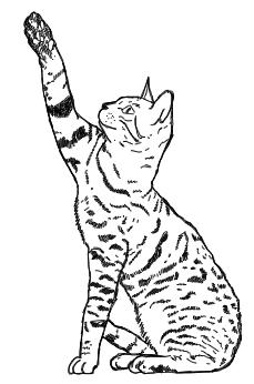 Katze greift - Zeichnung