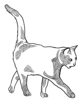 Katze von der Seite zeichnen - Zeichnung
