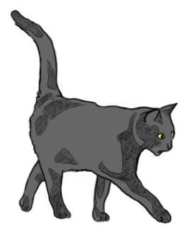 Katze von der Seite zeichnen - Zeichnung mit Kolorierung