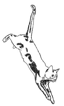 Katze springt runter zeichnen - Skizze