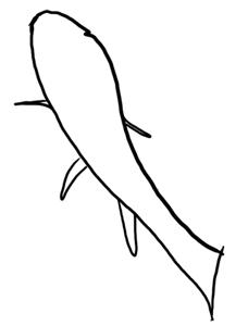 Koikarpfen schwimmt nach oben Grundskizze