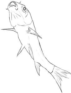 Koikarpfen schwimmt nach oben Zeichnung