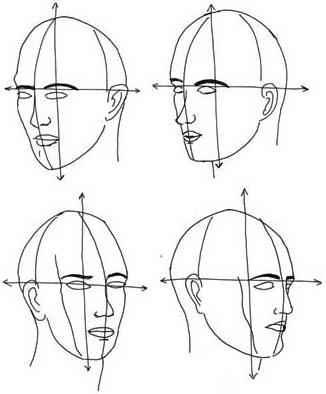 Kopf von seitlich - Gliederung und Aufbau