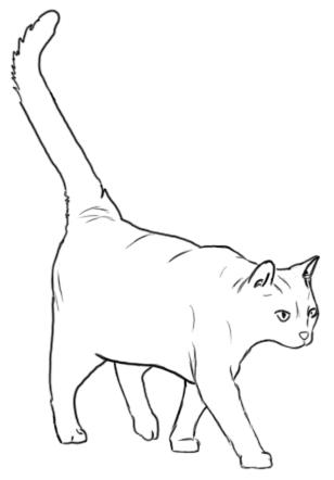 Laufende Katze Schrägansicht - Zeichnung