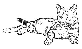 Liegende Katze - Zeichnung