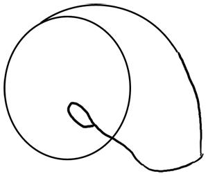 Nautilus Grundskizze