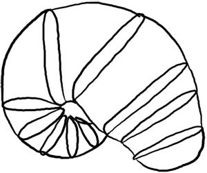 Meerestiere: Nautilus Grundformen
