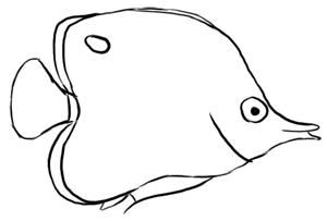 Pinzettenfisch Skizze
