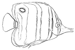 Pinzettenfisch Zeichnung