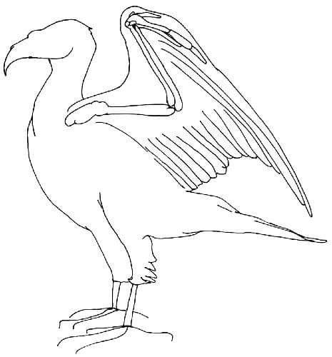 Querschnitt eines Vogelflügels