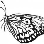 Schmetterlingsflügel zusammen geklappt von der Seite gezeichnet