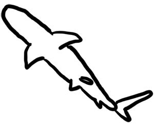 Fische und Haie: Schwarzspitzen Riffhai Grundskizze