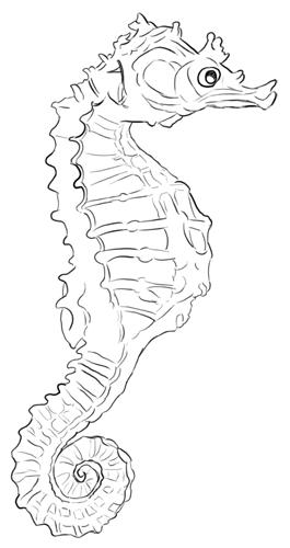 Meerestiere: Seepferdchen von der Seite mit Blick nach rechts Zeichnung