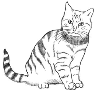 Sitzende Katze - Zeichnung