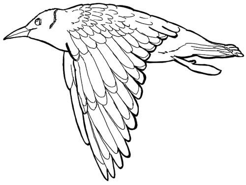 Skizze fliegender Vogel - Ansicht seitlich mit herunter gebeugten Flügeln