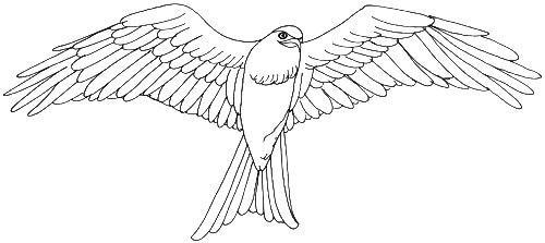Skizze fliegender Vogel - Ansicht von unten nach oben