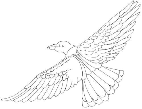 Skizze fliegender Vogel - Ansicht von oben nach unten
