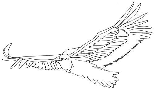Skizze fliegender Vogel - Ansicht vorne rechts