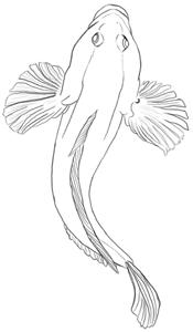 Fische und Haie: Urzeitlicher Fisch Zeichnung