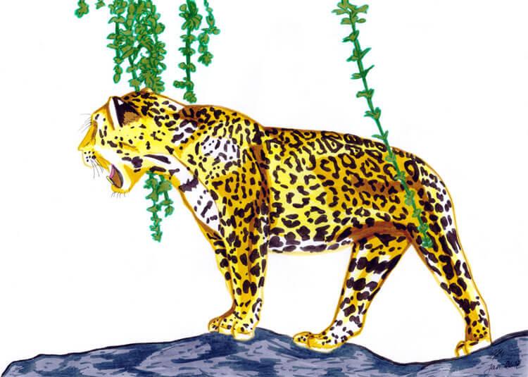 Kolorieren mit Filzstiften: Jaguar Filzstift Kolorierung