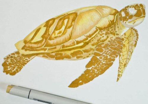 Meeresschildkröte malen mit Stylefile Brushmarker
