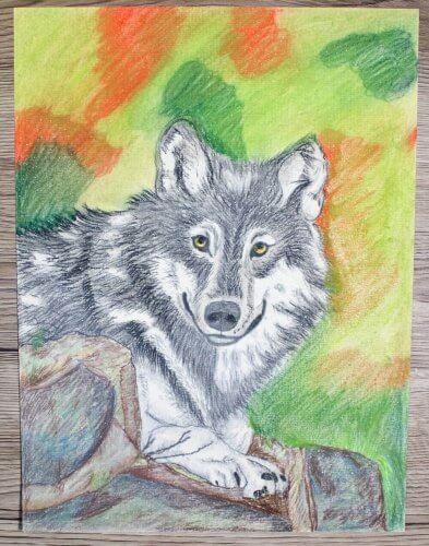 Wölfe und Wildhunde: Pastellmalerei