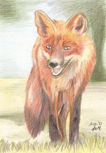 Fuchs zeichnen mit Buntstiften