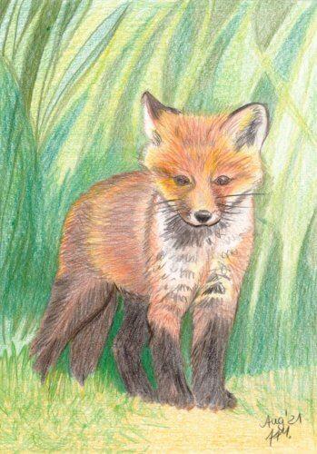 Fuchswelpe zeichnen mit Buntstiften