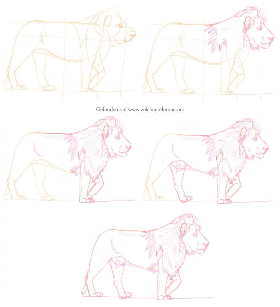 Löwe zeichnen Tutorial in einzelnen Schritten