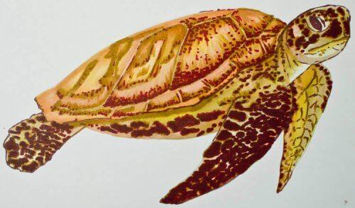 Meeresschildkröte malen mit Brushmarker
