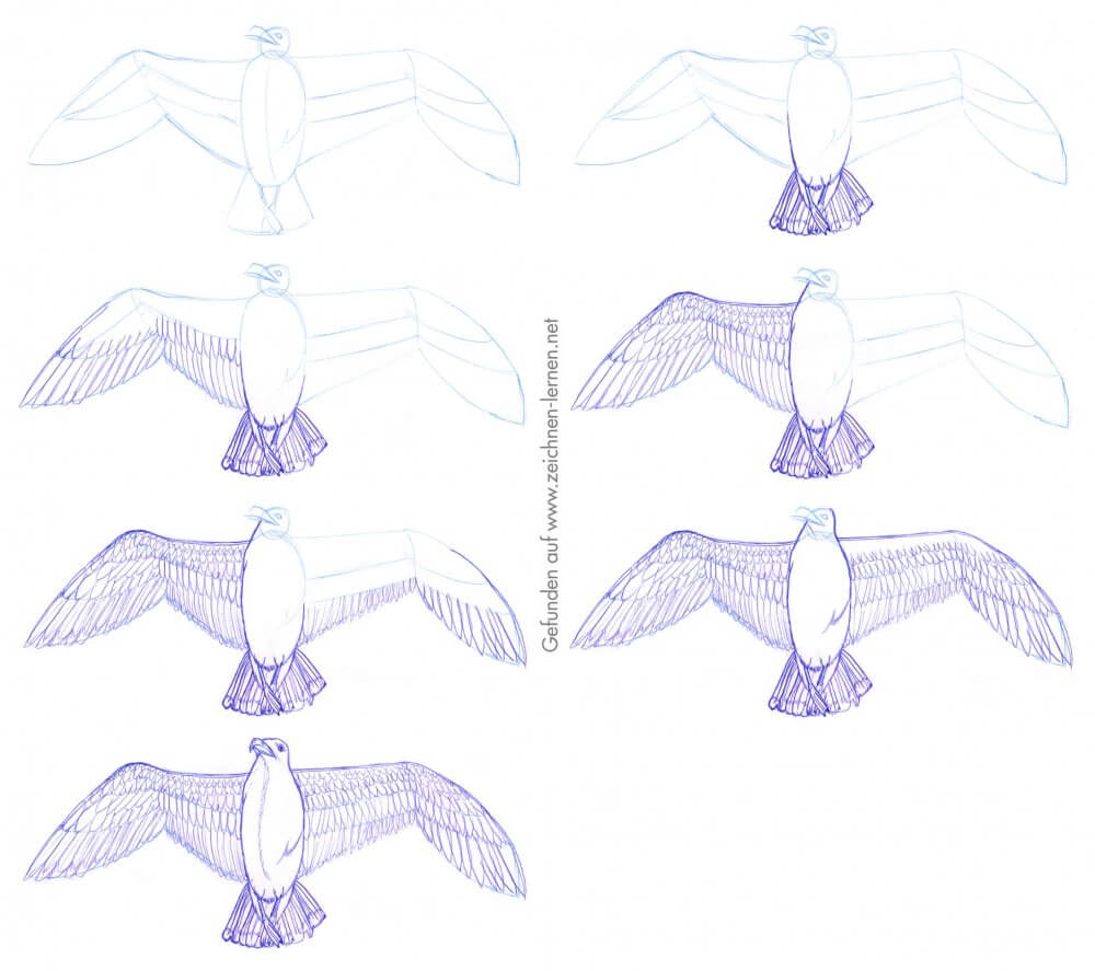 Möwe: Vogelflügel zeichnen in einzelnen Schritten