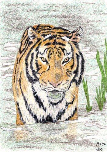 Tiger Buntstiftkolorierung