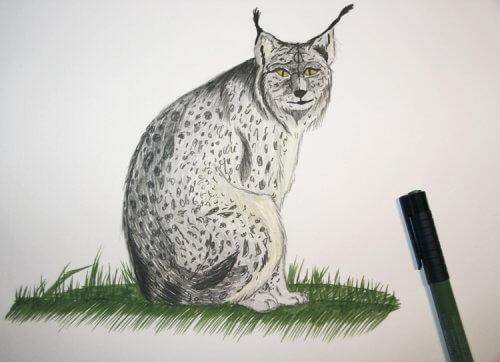 Luchs - koloriert mit PITT artist pen