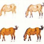 Pferd zeichnen und malen Schritt für Schritt