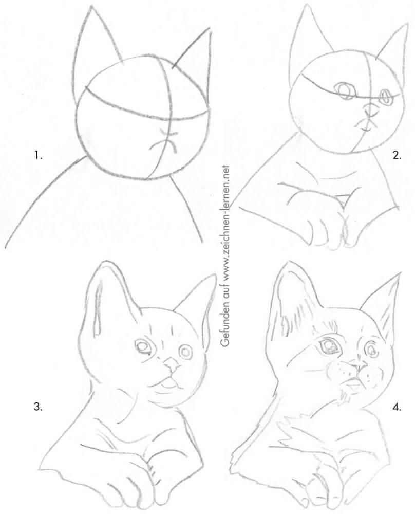 Süßes Kätzchen zeichnen - Schritt für Schritt Skizze