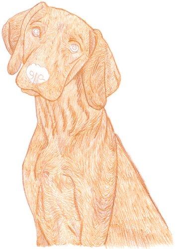 Hund zeichnen: Buntstiftkolorierung - Schritt 1