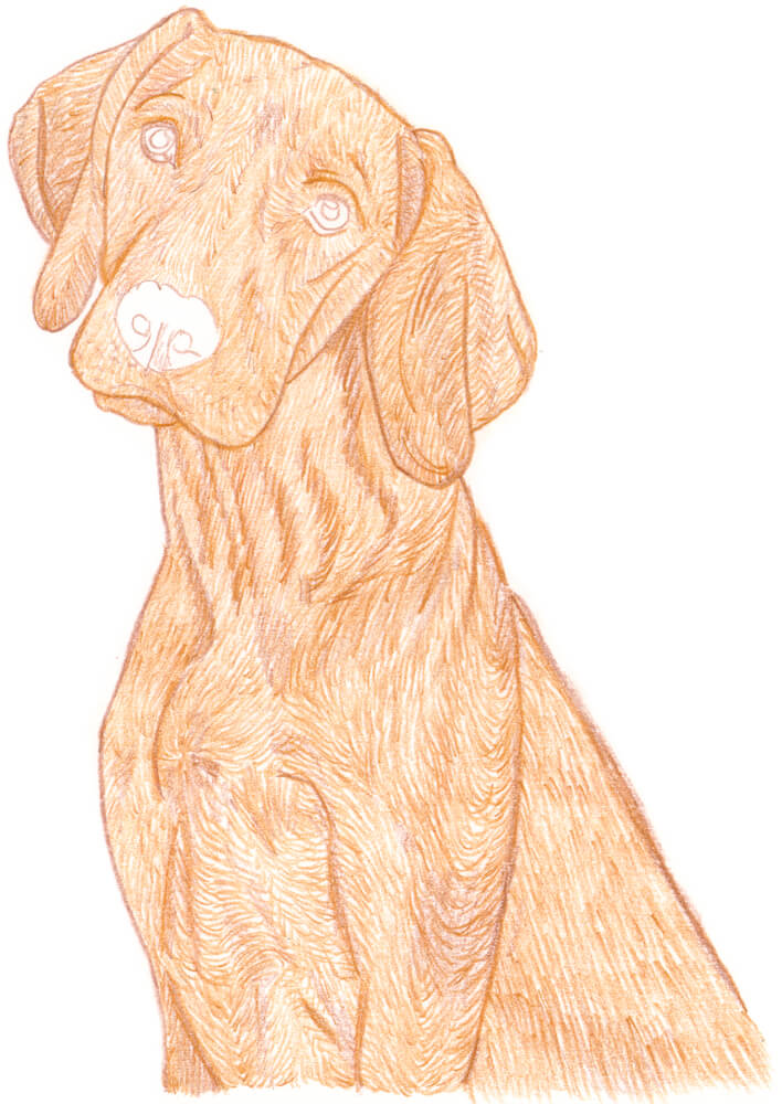 liegender hund zeichnen  tier malen