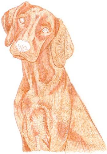 Hund zeichnen: Buntstiftkolorierung - Schritt 2