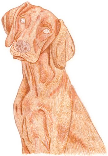 Hund zeichnen: Buntstiftkolorierung - Schritt 3