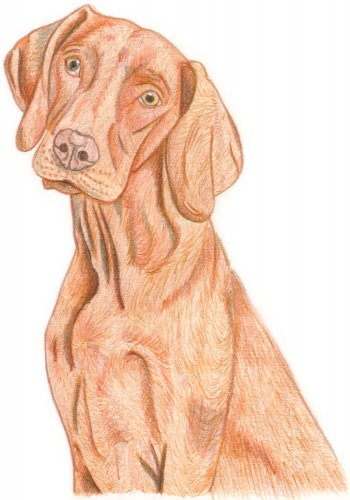 Hund zeichnen: Buntstiftkolorierung - Schritt 4