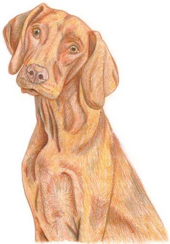 Hund zeichnen: Buntstiftkolorierung - Schritt 5