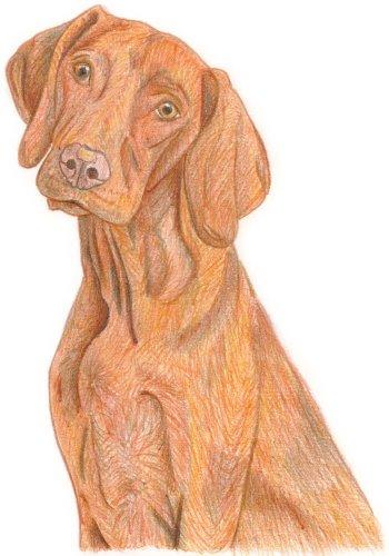 Hund zeichnen: Buntstiftkolorierung - Schritt 6
