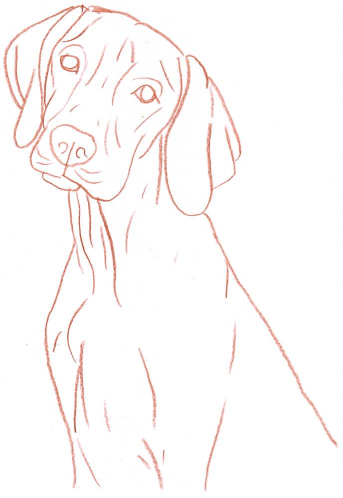 Hund Zeichnen Lernen So Zeichnest Du Unsere Pelzigen Freunde